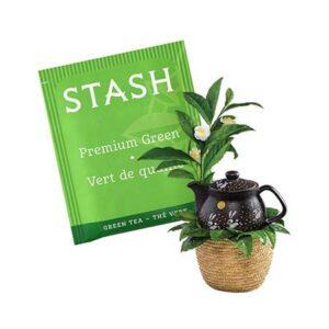 Stash Premium Green Tea Bags 30ct